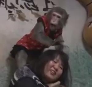 Macacos 'trabalham' de garçom e brincam com clientes em bar do Japão