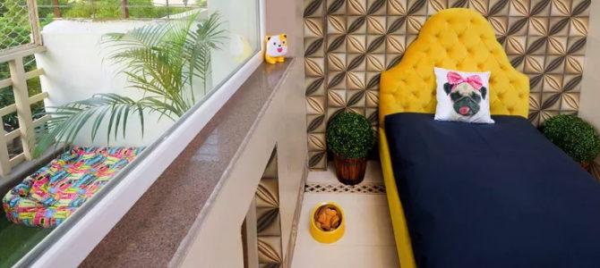 Hotel de luxo para cães na Índia tem piscina, spa e cerveja canina